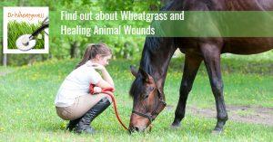 馬と少女とウィートグラス